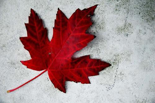 canadiana_03