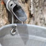 maple-tap